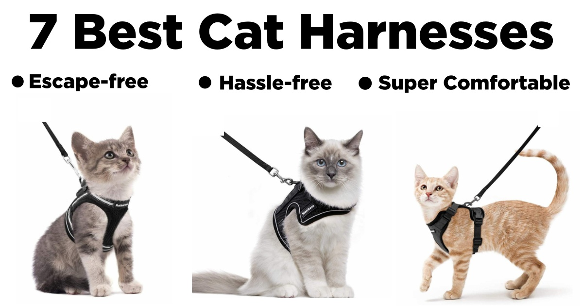 best walking harness for cats