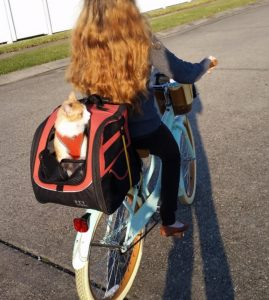 Pet Gear Cat Carrier Backpack For Travel