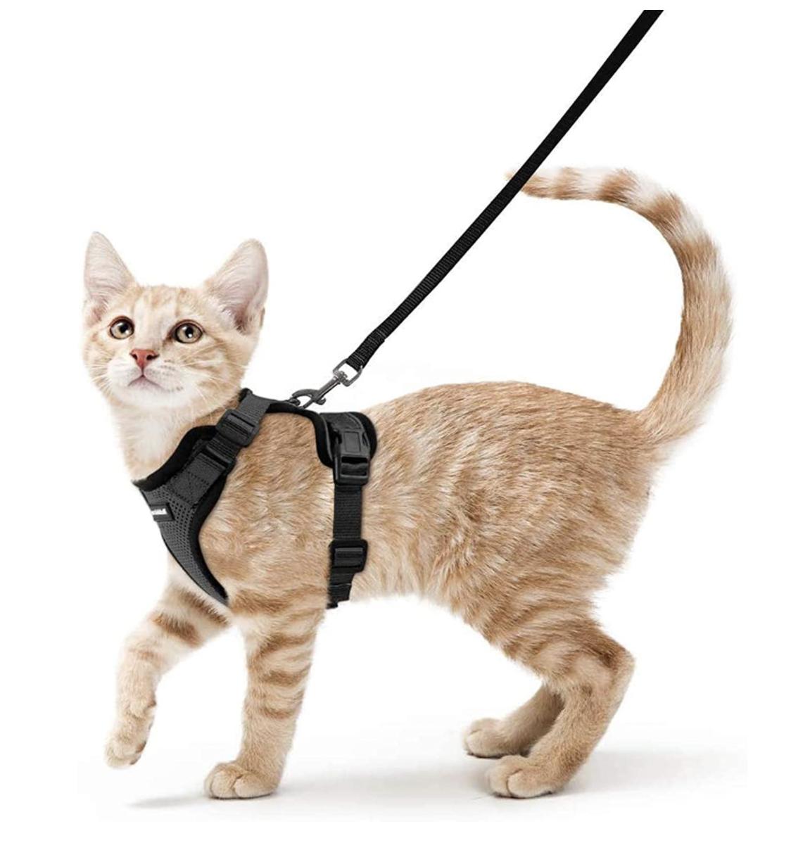 best kitten harness