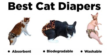 best disposable cat diapers