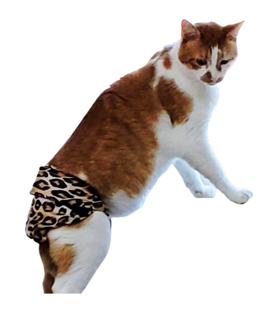 kitty cat diapers