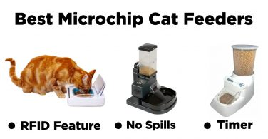 Bes Microchip Cat Feeders