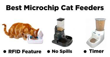 Bes Microchip Cat Feeders